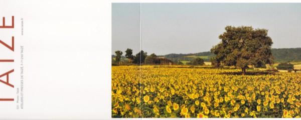 Sonnenblumenfeld 1